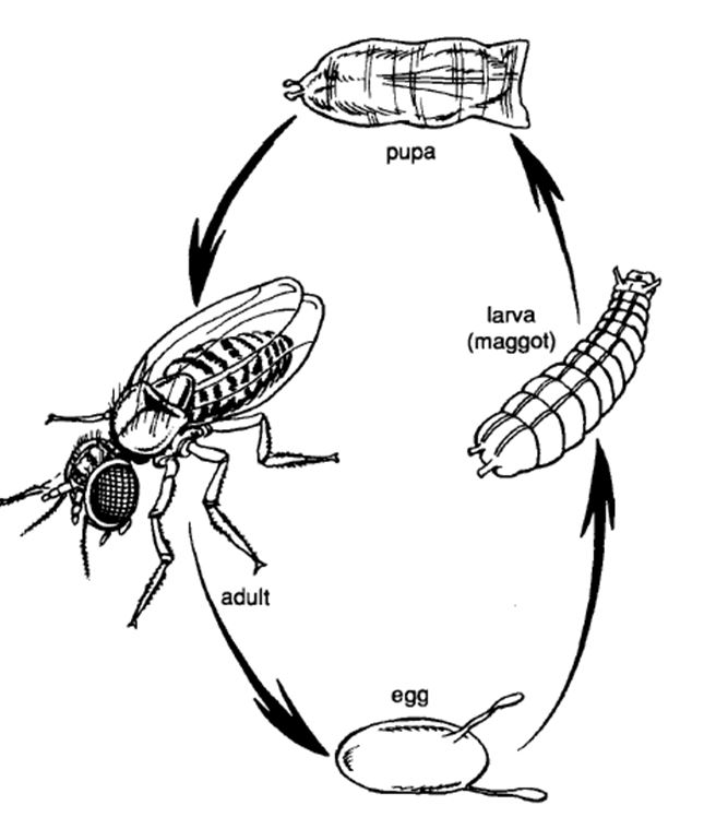 Insects | Life Cycle | Body Parts | Usefulness to Humans