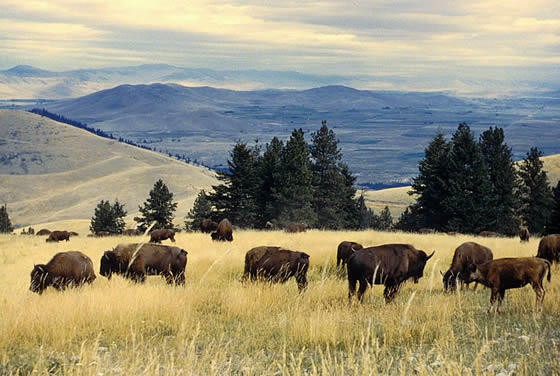american great plains animals - photo #19